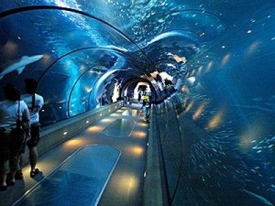 aquarium in Newport, Oregon.