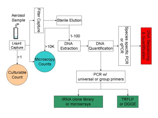 Pathways to PCR-based bioaerosol analysis.