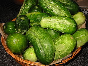 Cucumbers (specifically, Gherkins) gathered fo...