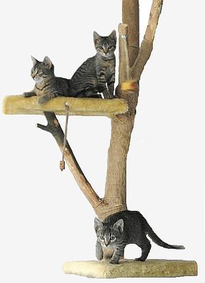 Popis = 3 mačiatka na škrabadle, Zdroj = vlast...