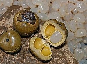 English: Boiled and opened Arenga pinnata frui...
