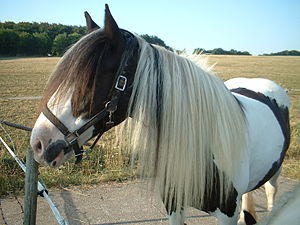 example for a horse mane