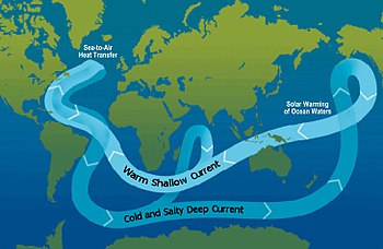 Ocean Circulation Conveyor Belt. The ocean pla...