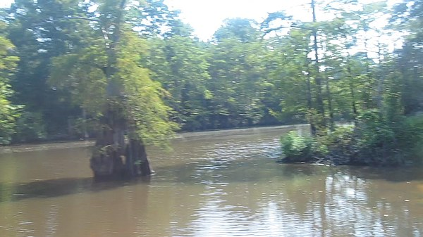 https://i1.wp.com/upload.wikimedia.org/wikipedia/commons/thumb/a/ae/Revised_photo_of_Dorcheat_Bayou_in_Webster_Parish%2C_LA_MVI_2548.jpg/600px-Revised_photo_of_Dorcheat_Bayou_in_Webster_Parish%2C_LA_MVI_2548.jpg