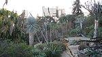 UCLA BOT GARD 2009 023.jpg
