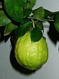 Citrus medicus fruit.jpg