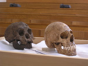 cast of Homo floresiensis compared to a microc...