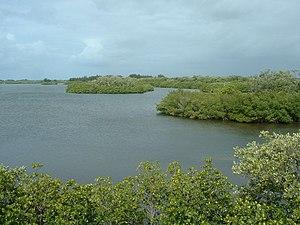 Indian River shore of , Florida