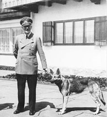 Blondi Hitler's dog