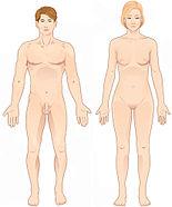https://i1.wp.com/upload.wikimedia.org/wikipedia/commons/thumb/b/b2/Anatomical_position.jpg/155px-Anatomical_position.jpg