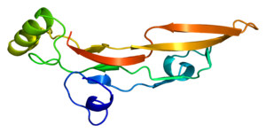 Structure of the TGFB2 protein. Based on PyMOL...