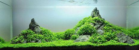 Aquascaping-minilandschaft-lennart