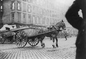 N.Y.C. Garbage collector's strike, 1911: horse...
