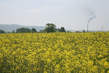 English: View through rape field towards Westb...