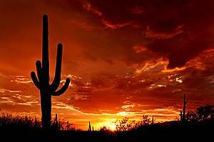 The silhouette of a large saguaro stands at su...