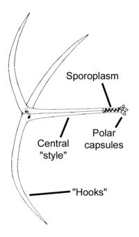 Myxozoa  Wikispecies