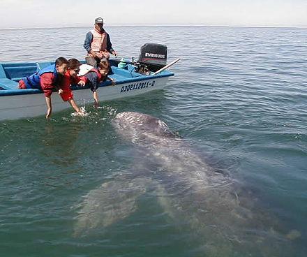pierderea în greutate de balenă din dreapta sudică wellness produse de slabit