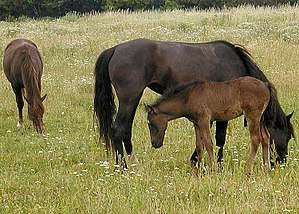 Horses grazing below the flight path into Lond...