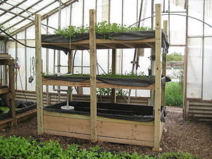 A portable aquaponics system with watercress