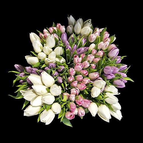 Bunch tulip Paris 2011