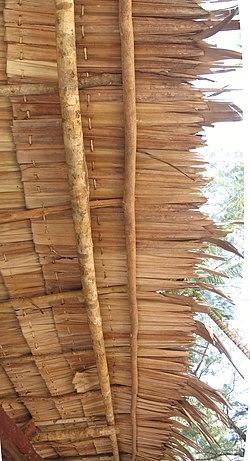 Atap Nipah Wikipedia Bahasa Melayu Ensiklopedia Bebas