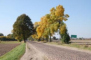 Minor road leading to Żelechów, Poland.