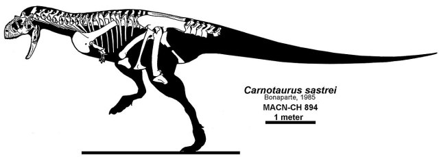Carnotaurus reconstruction Headden.jpg