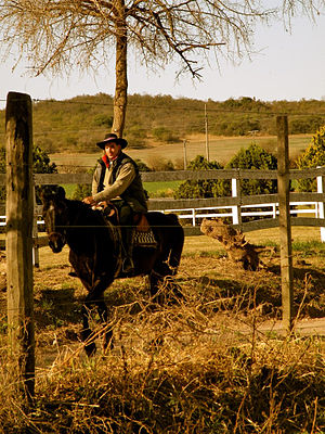 English: Contemporary Gaucho in Argentina. Pam...