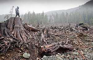 Cleacut logging of old-growth forest as seen i...
