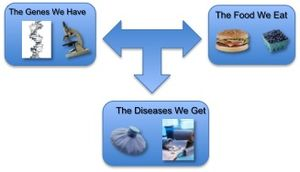 English: nutrigenomics, flow chart, diet, gene...