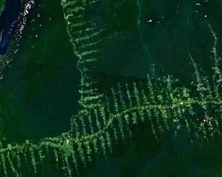 File:Amazonie deforestation.jpg