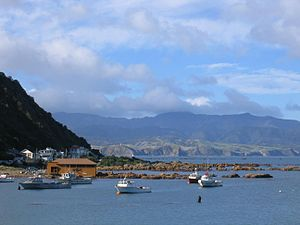 Fishing boats at Island Bay, Wellington, New Z...