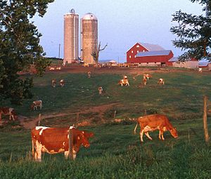 English: A small dairy farm in western Maryland