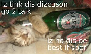 Kitteh drunk on non-alcoholic beer.