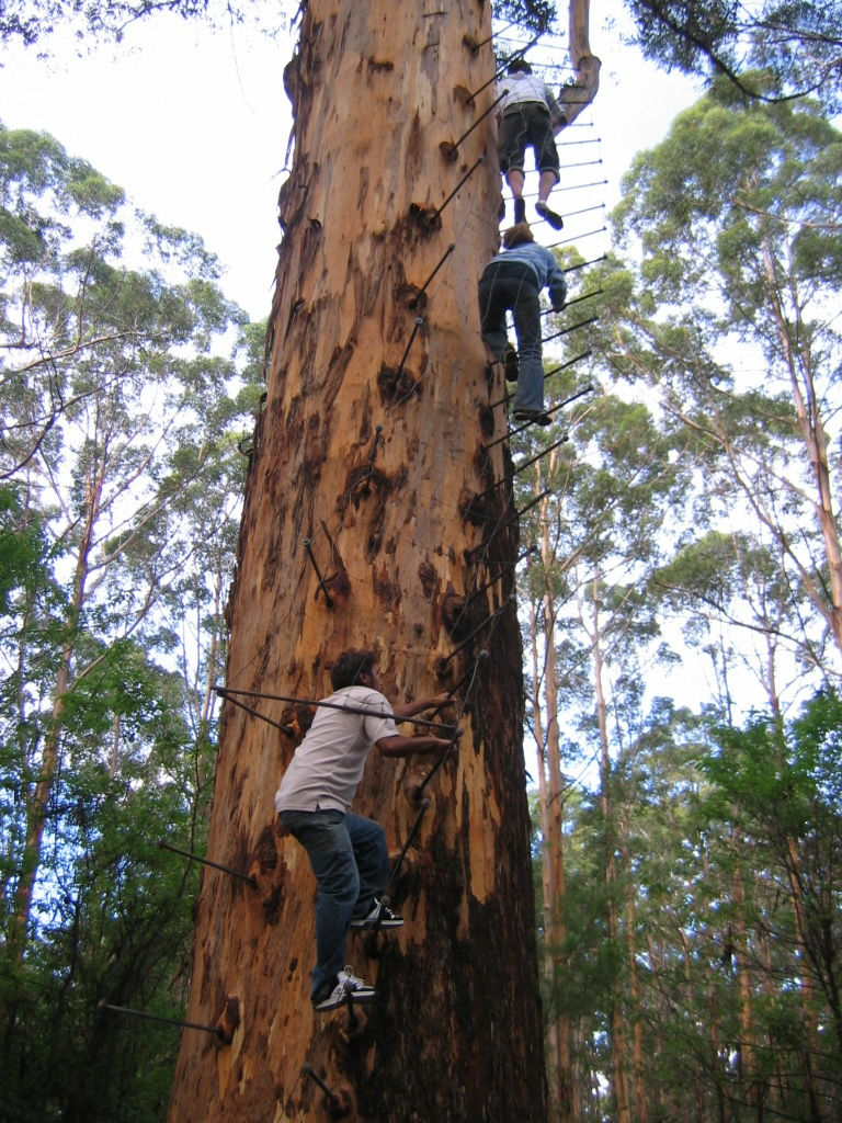 Pemberton Western Australia Travel Guide At Wikivoyage