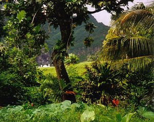 Tropical rainforest, Fatu Hiva Island, Marques...