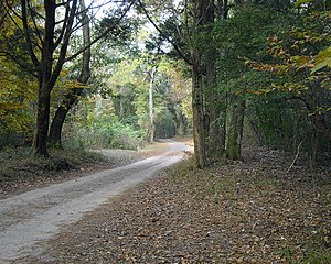 A lonely road in Historic Blakeley State Park ...