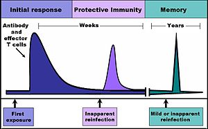 The time-course of an immune response begins w...