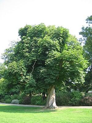 Twisted Tree and canopy. This is one of the ma...