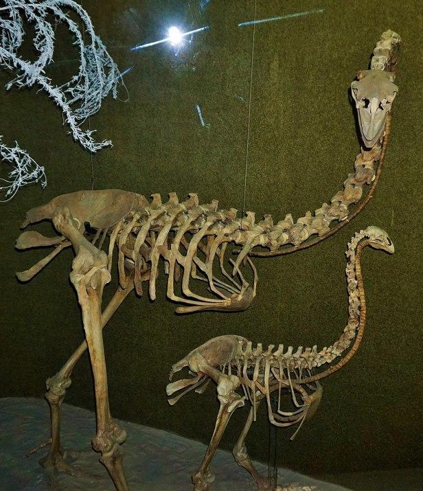 Canterbury Museum, Christchurch - Joy of Museums - Moa