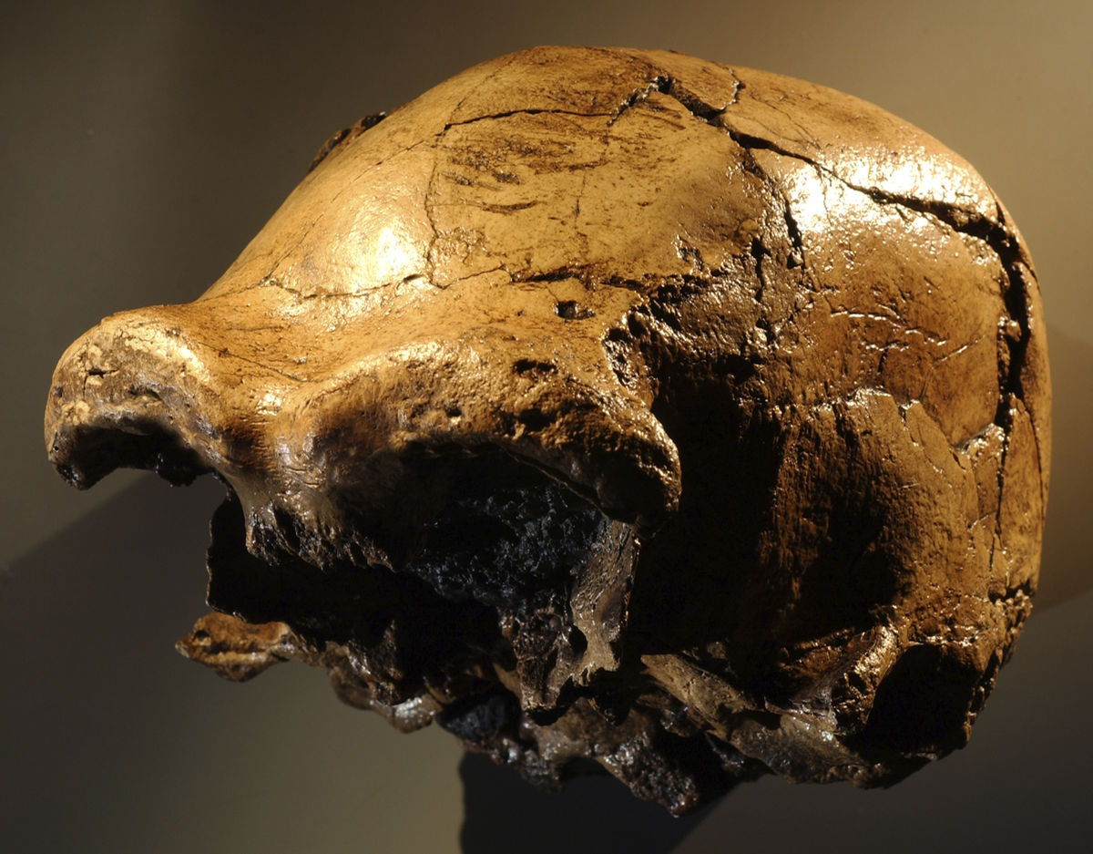 Daka Skull Wikipedia
