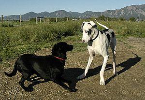 Stella meets a friend on the trail.