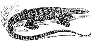 English: Line art drawing of a monitor lizard.
