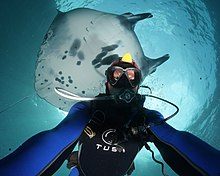 giant manta ray in bali - IAmInLoveWithNature