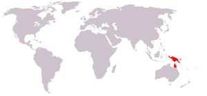 Tuepfelkuskus p maculatus map