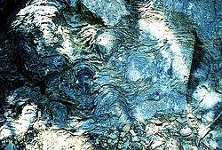 Siyeh oluşumunda, Glacier Milli Parkı Kambriyen öncesi stromatolitler. 2002'de, UCLA'dan William Schopf bilimsel dergi Nature 'da bu tip jeolojik oluşumların 3.5 milyar yaşında fosilleşmiş alg mikroorganizmaları içerdiğini iddia eden tartışma yaratan bir makale yayımladı.[1] Eğer bu doğru ise, bunlar yeryüzündeki yaşamın bilinen ilk örnekleri olacak.