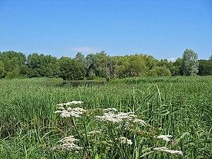 English: Pond at Magor Marsh Nature Reserve Mo...