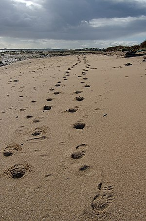 Footprints from Westhaven. Looking back along ...