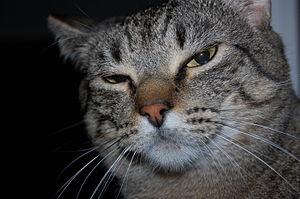 English: A housecat named Princess who highly ...