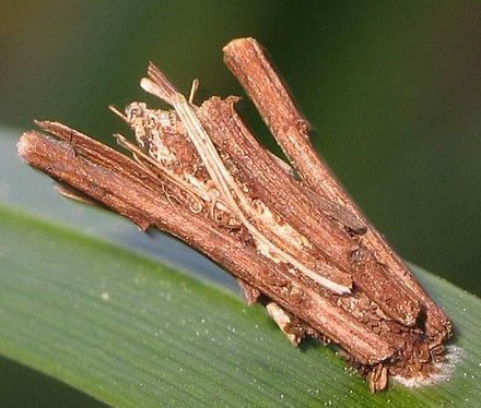 Описание гусениц их питание и строение